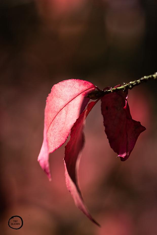 Goldener Oktober Blätter Fotoaufgabe 1-10