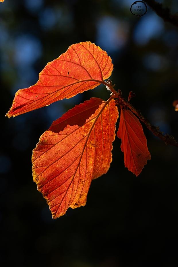 Goldener Oktober Blätter Fotoaufgabe 1-30