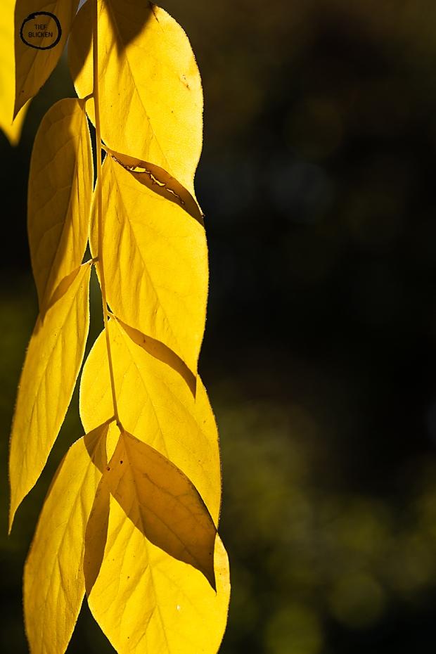 Goldener Oktober Blätter Fotoaufgabe 1-40