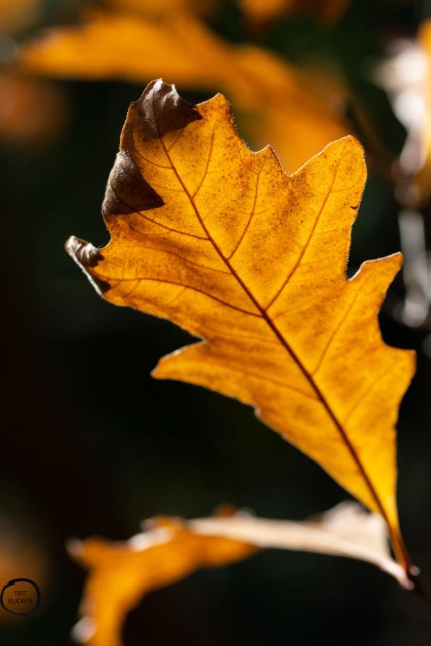 Goldener Oktober Blätter Fotoaufgabe 1-60