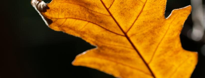 Goldener Oktober, Fotoaufgabe 1 - Blogbeitrag unter https://tiefblicken.com/