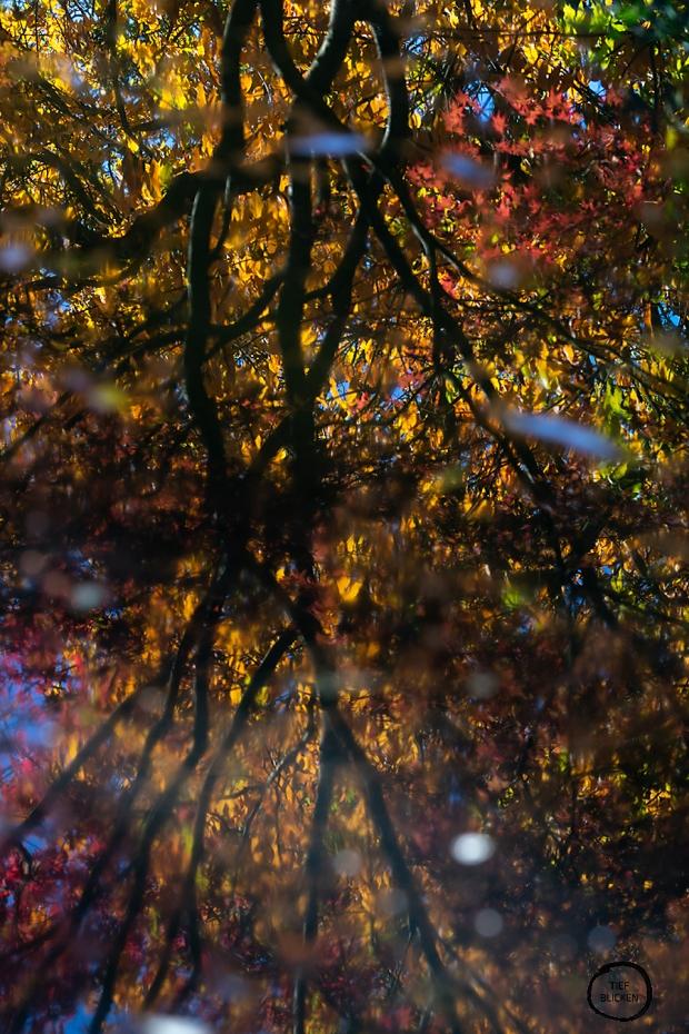 Goldener Oktober Blätter Fotoaufgabe 1-70